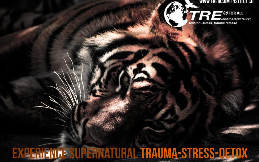 Warum der Körper bei Trauma-Verarbeitung essentiell ist – Was ist und wie wirkt TRE® nach Dr. Berceli?